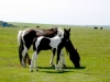 Horse and pony trekking, Cornwall