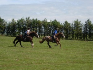Exilarating trail ride across Bodmin Moor