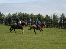 Endurance riding across Bodmin Moor