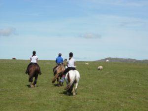 Horse and pony trekking - Bodmin Moor