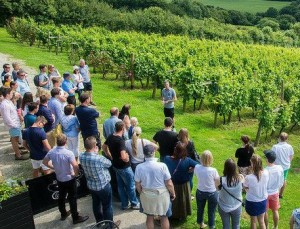 Camel Valley Wine Tour